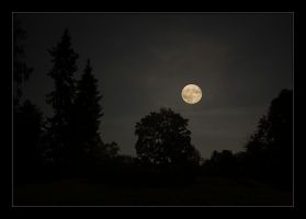 Full moon over forest by Hartmut-Lerch