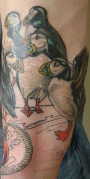puffin newfie sleeve by kenpower