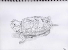Turtle by Flooboo