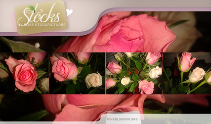 Stockpack: Roses by BTTRFLYKISS