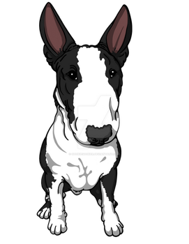 English Bull Terrier by sookiesooker
