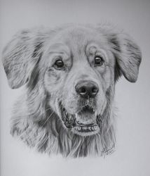 Bo the Retriever by grimleyfiendish