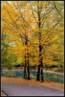 lonely in the fall... by Iulian-dA-gallery