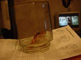 Frog in  Jar by Chron1