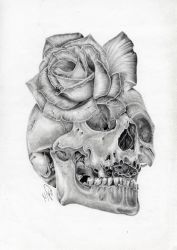 Skull Rose morph graphite pencil drawing by Wazche