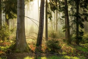 Forest Morning by artmobe