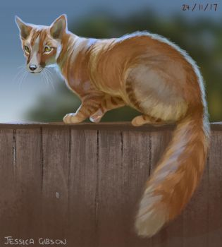 Fox Cat on your Fence by Servaline