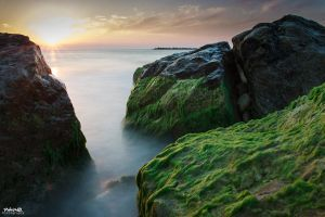 The green by dafna