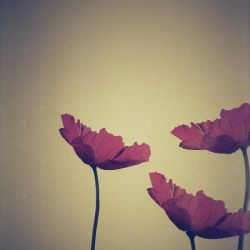 ...redscale private life by weltengang