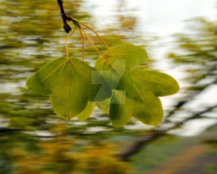 Autumnal leaves by passionefoto