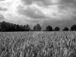 Ashford countryside by IsabelleEscapade