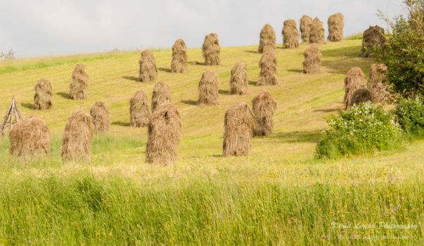 Hay dried on the slope by vertiser