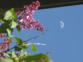 Moon and Lilacs by PSOtweak