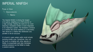 Imperial Ninifish by Dingbat1991