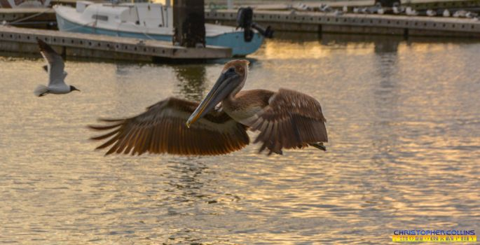 Pelican coming in for a landing in port 1 by ENT2PRI9SE