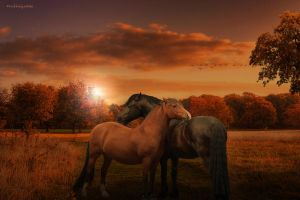 Brothers in fate by gotman68