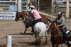 Stock - Horse Team Penning - 040 by aussiegal7