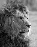 The King 2 by 30-noir