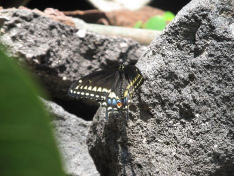 Butterfly on the rocks by AmateurSciencePhoto