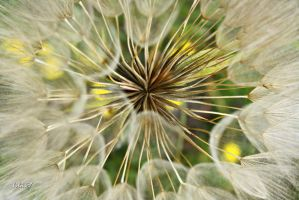 in the middle of a different dandelion by biba59