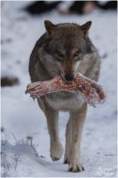 GreyWolf - Beef on the Rocks by W0LLE