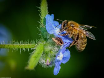 The bee did not forget... by clochartist-photo