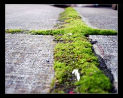 moss in a crack by juntao