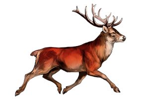 Trotting Red Deer by oxpecker