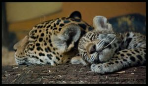 jaguar: sweet dreams by morho