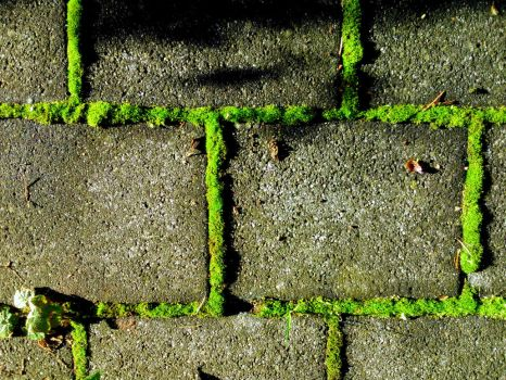 green outline by Mittelfranke