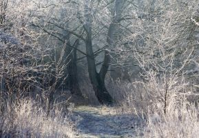Winter Forest by adambrowning