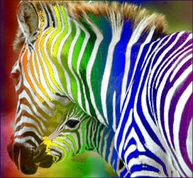rainbow zebras 1 by meihua