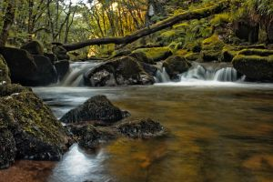 Golitha Falls by Measels
