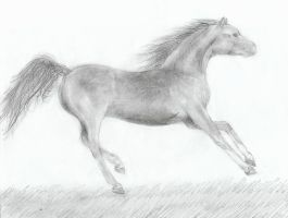 Cantering mare by xilovehorsesx