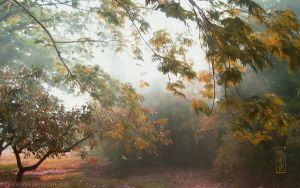 The Misty Forest by emmil