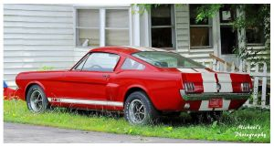 A Mustang GT 350 by TheMan268