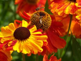 two wasps, bright by KerrieLBrown