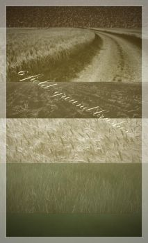 6 field and ground brushes by fotojenny