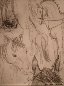 Horse Sketch Page by carampark