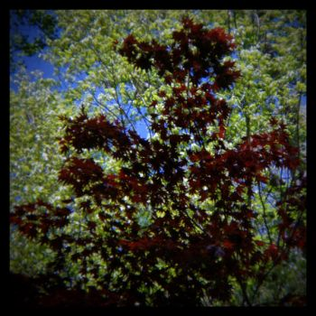 untitled (backlit leaves) by filmnoirphotos