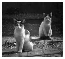 Two cats at sunset by Tweet-dnb