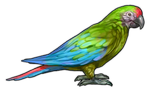 Green Macaw Parrot Companion by TokoTime