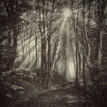 the breath of the wood by Weissglut