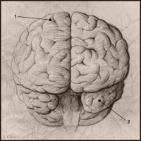 The Brain by soliton