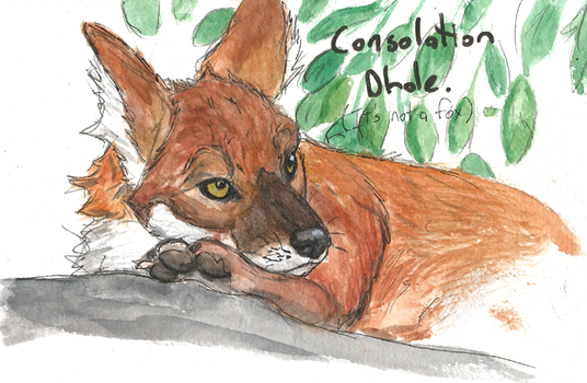 Consolation Dhole by ComradeK
