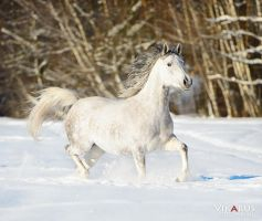White on the white by Vikarus