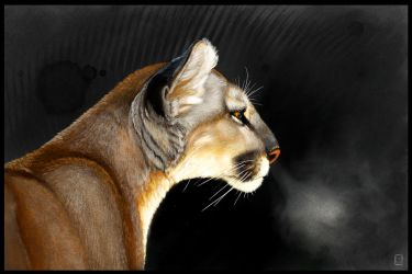 Cougar Intensity Sketchbook Mobile Tutorial by ArtofJefferyHebert