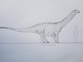 First sauropod of the year by paleosir