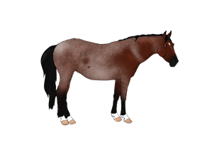 Bay Roan Pony Design by NorthernMyth