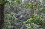 Mexican Cloud Forest by Guadisaves02